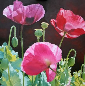 Alexander-Linda-Poppy Garden